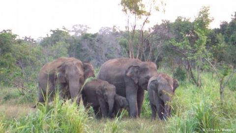 birmania-280514.jpg